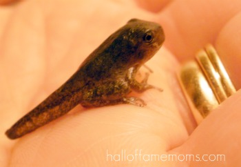 How to raise tadpoles to frogs.