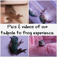 Raising tadpoles into frogs.