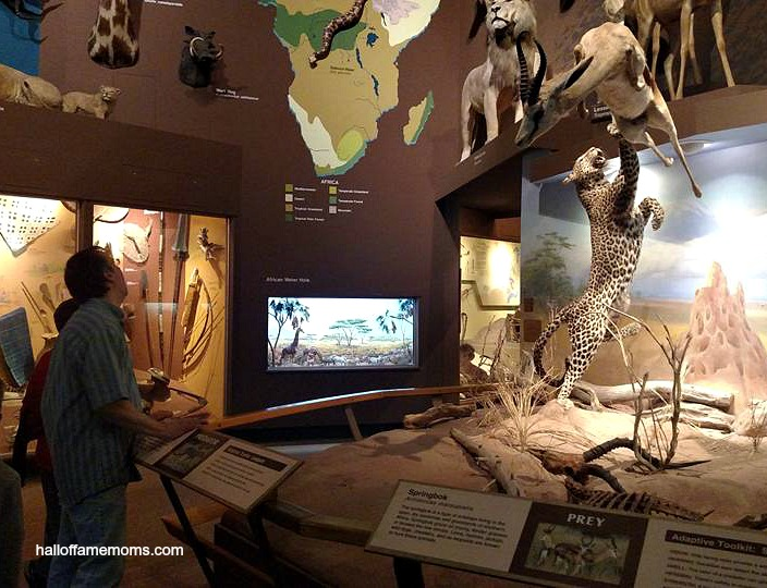 Visiting the CMNH 2016 in Ohio