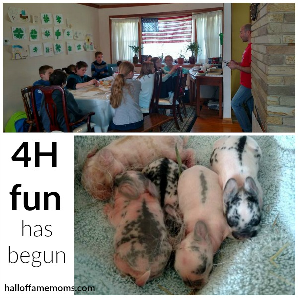 Our first year in 4H has begun (and 3 day old baby bunnies).