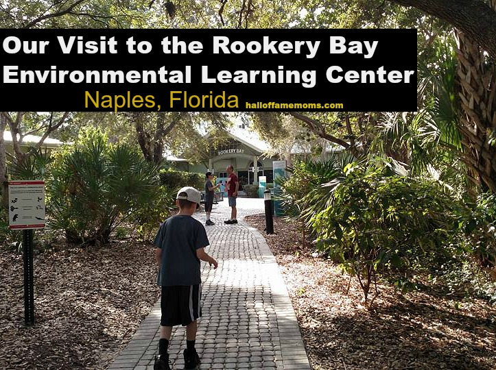 Our Visit to the Rookery Bay Environmental Learning Center, Naples, FL (Pt 5)