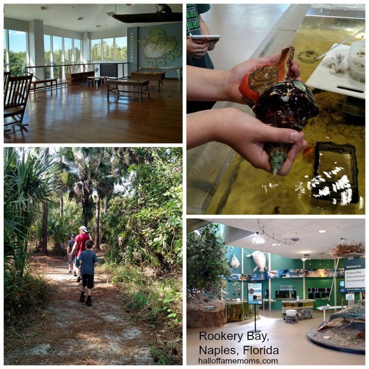 Visiting Rookery Bay Environmental Learning Center in Naples, FL