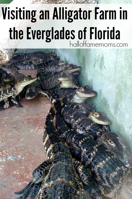 Our Everglades Excursion Tour in SW Florida