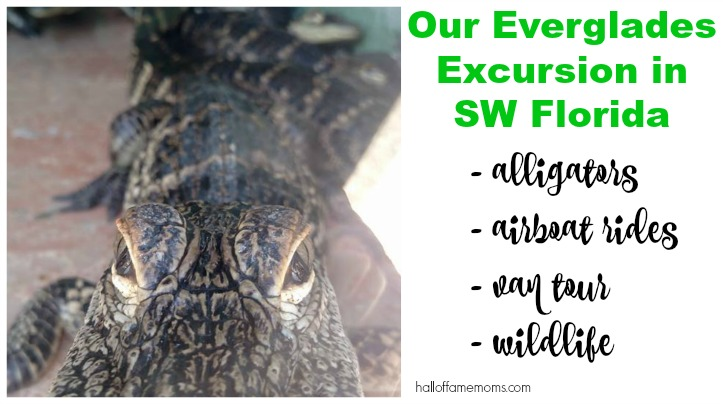 Visiting an Alligator Farm, Airboat Ride & Everglades Excursion Tour (Pt 9)