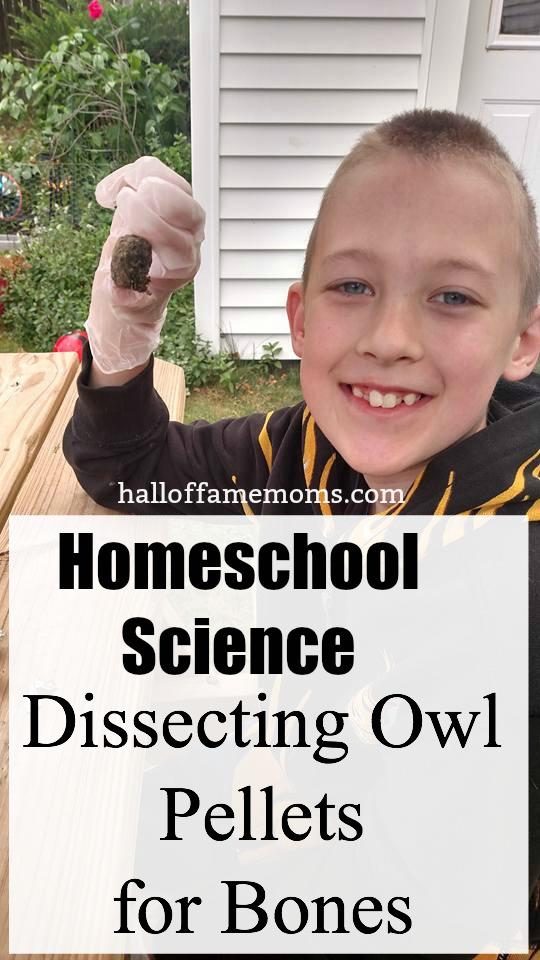 Dissecting Owl Pellets for Bones - Homeschool Science