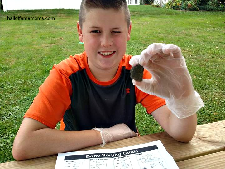 Learning science hands-on with an Owl Pellet Dissection Kit